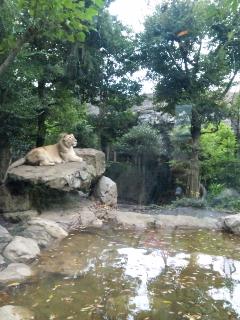 上野遠足!?〜上野動物園その1